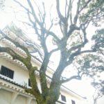 村上春樹さんからメールの返事が来た!!!:小鳥ピヨピヨ