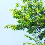 ドロレス・キャノン~「2012年新しい地球」を語る