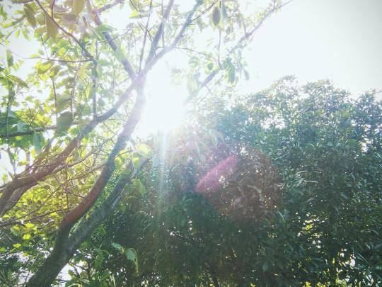 日陰でまったり by Chika | ShortNote