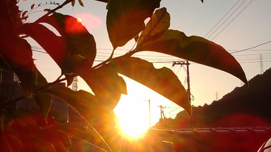 オメガ3が豊富にとれる野菜パスリーンって知ってる?【ハワイ発最新ヘルスケアレポート】